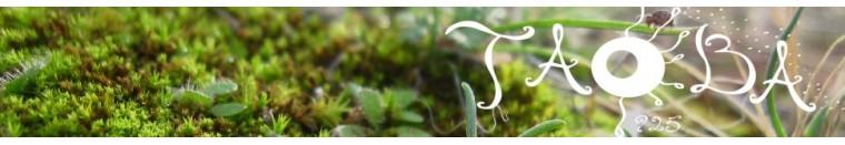 Taoba 925: Joyas en plata para Hombre. Joyas artesanales. Plata 925